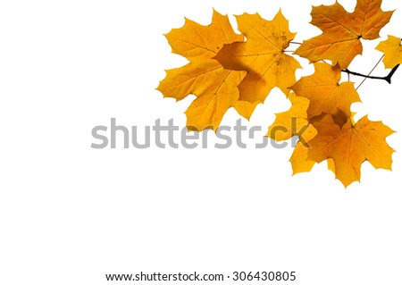 Colorful autumn branch isolated on white background. - stock photo