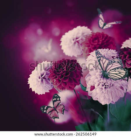 Colorful autumn chrysanthemums with flares, butterfly - stock photo