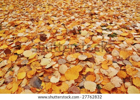Colorful Autumn Fallen leaves background