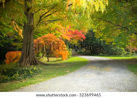 Colorful autumn foliage and path - stock photo