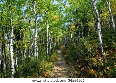 Colorful autumn forest (mixed aspen and shrubs) in kananaskis country, alberta, canada - stock photo