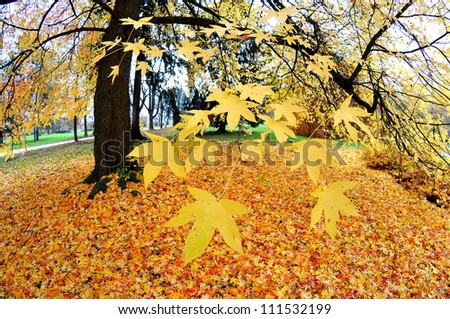 Colorful autumn in a park - stock photo