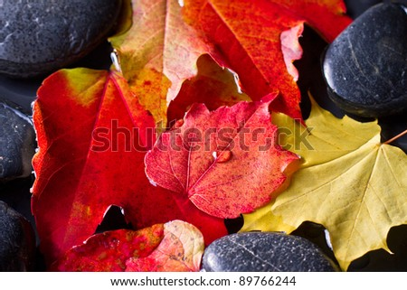 Colorful autumn: Indian summer - stock photo