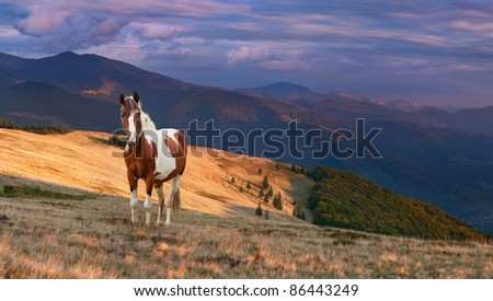Colorful autumn landscape in the mountains with horse. Sunrise - stock photo