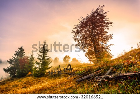 Colorful autumn landscape morning in the Carpathian mountains. Transylvania,Romania. Europe. - stock photo
