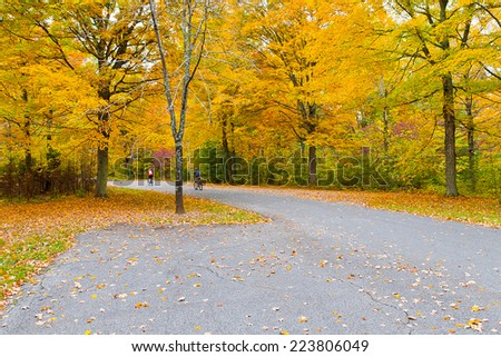 Colorful autumn landscape, sunny day in park.  Bernheim Arboretum and Research Forest near Louisville, Kentucky, USA. - stock photo