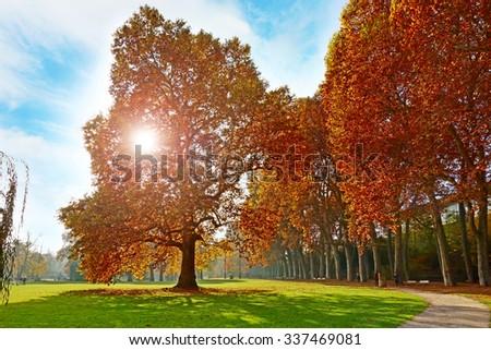 Colorful autumn landscape - vibrant trees in park, blue sky and sunshine / sunset / sunrise                                - stock photo