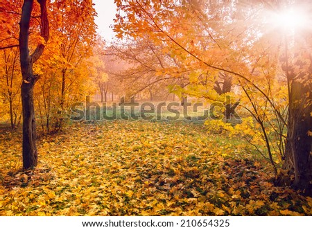colorful autumn landscape with yellow trees and sun, natural background - stock photo