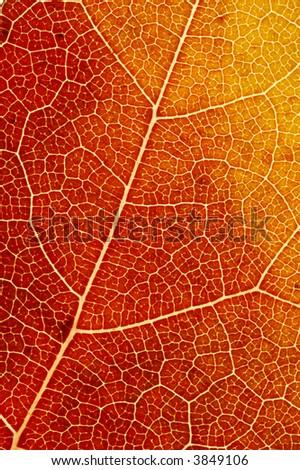 Colorful Autumn Leaf Fibres Texture Image. - stock photo