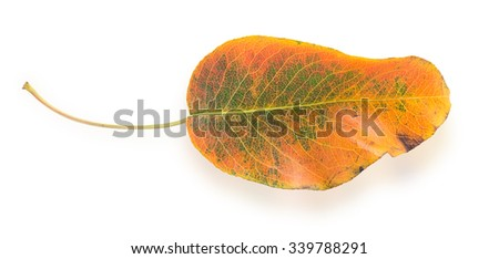 Colorful autumn leaf isolated on a white background - stock photo