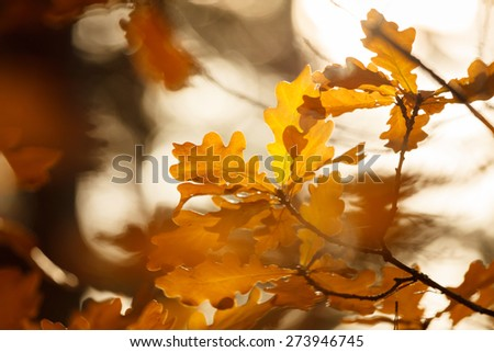 Colorful autumn leaves - stock photo