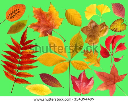 colorful; autumn leaves