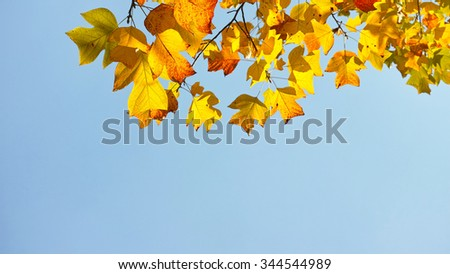 colorful autumn leaves againt blue sky.