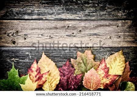 Colorful autumn leaves arranged on the bottom of the frame on old rustic wooden boards.   Filtered for a vintage retro look.  - stock photo