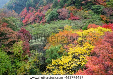 Colorful Autumn leaves at Mount Rokko in Kobe Japan