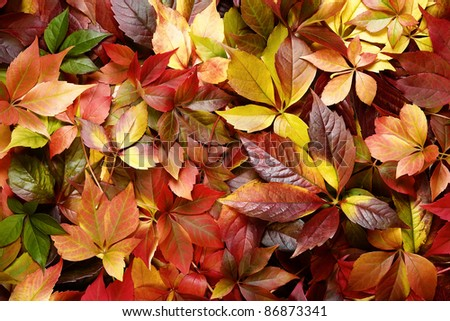Colorful autumn leaves background - stock photo