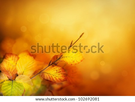 Colorful Autumn leaves background with bokeh lights - stock photo
