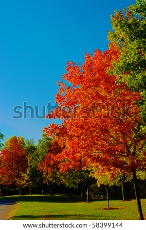 Colorful Autumn Leaves bright change of color for the season - stock photo
