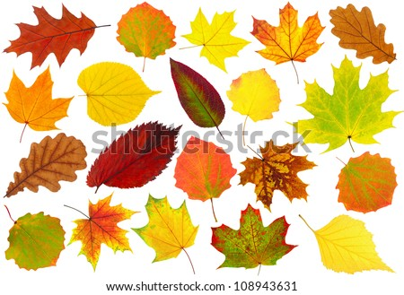Colorful autumn leaves collection isolated on white - stock photo
