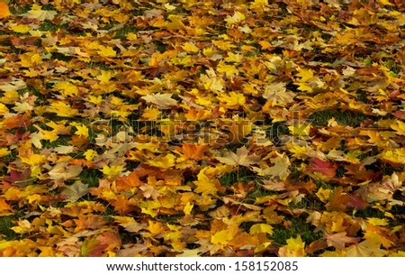 Colorful autumn leaves, colorful background of autumn leaves, autumn leaves background, multicoloured leaves, autumn season, colorful background, selective focus - stock photo