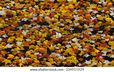 Colorful autumn leaves in water as a background - stock photo
