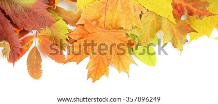 Colorful autumn leaves, isolated on white - stock photo
