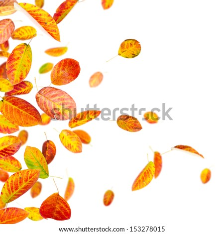 Colorful autumn leaves isolated on white background - stock photo