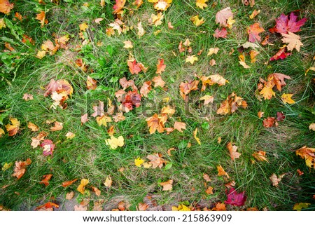 Colorful autumn leaves on a green grass  - stock photo