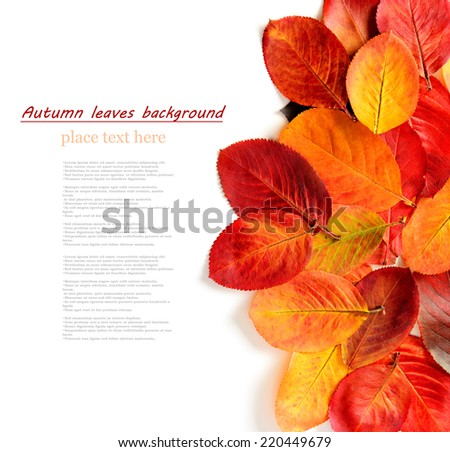 colorful autumn leaves on a white background - stock photo
