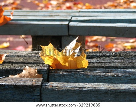 Colorful autumn leaves on the bench