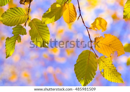 Colorful autumn leaves on the branch.