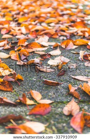 Colorful autumn leaves on the law(ground,path)  in autumn.