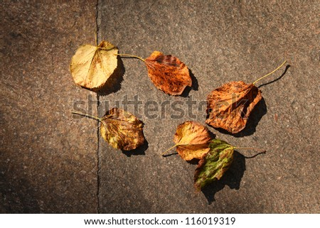 Colorful autumn leaves on the stone floor. - stock photo