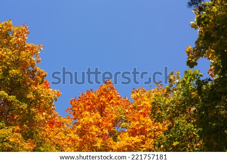 colorful autumn leaves on the trees against the blue sky - stock photo