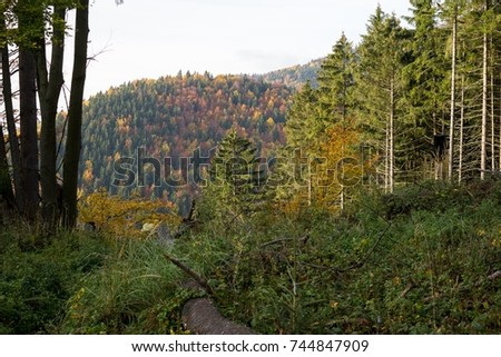 Colorful autumn leaves on the trees in nature. Slovakia