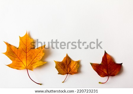 Colorful autumn leaves on white - stock photo