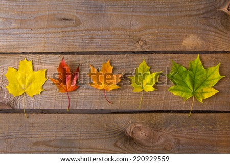 Colorful autumn leaves on wood - stock photo