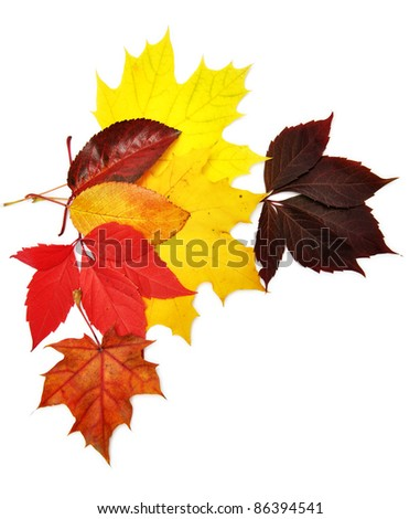 colorful autumn leaves over white background with clipping path - stock photo