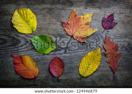 Colorful autumn leaves scattered on grainy wooden background. - stock photo