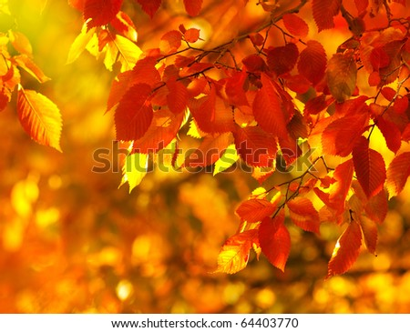 Colorful autumn leaves,shallow focus - stock photo