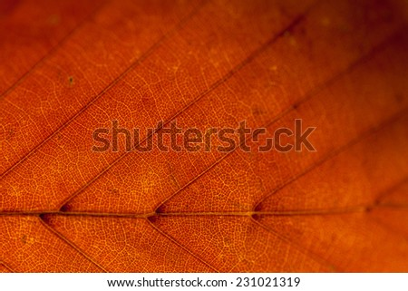 Colorful autumn leaves texture background. Macro.