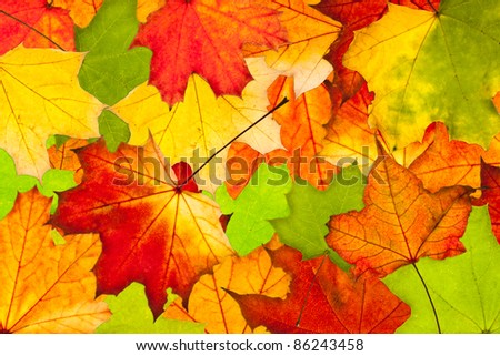 Colorful autumn leaves. Use for background or texture - stock photo