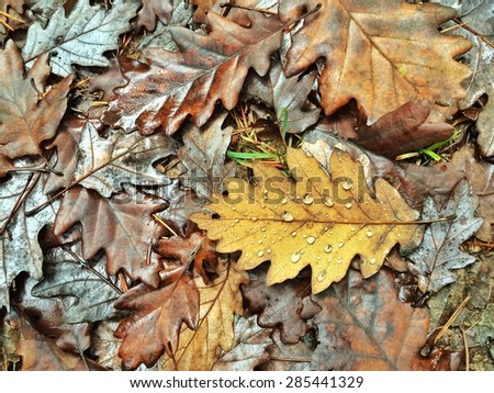 Colorful Autumn leaves with morning dew - stock photo