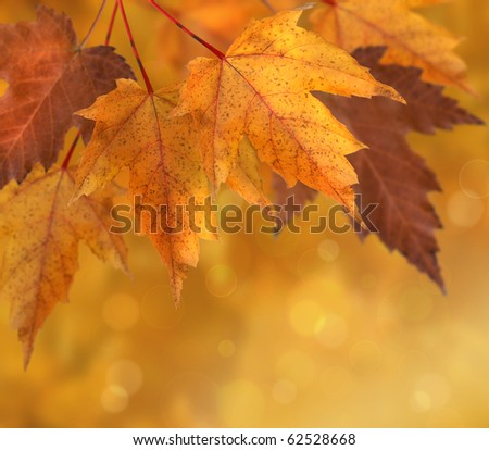 Colorful autumn  leaves with shallow focus background - stock photo