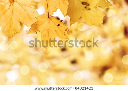 Colorful autumn leaves with shallow focus background. - stock photo