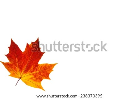 colorful autumn maple leaf isolated on texture white background - stock photo
