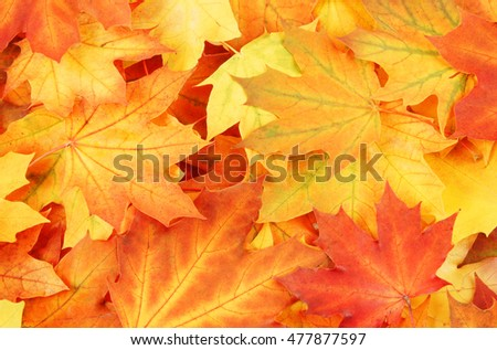 stock-photo-colorful-autumn-maple-leaves