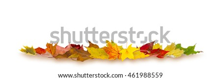 Colorful autumn maple leaves lying on white background.
