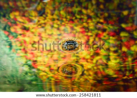 colorful autumn of water reflection and water drop for background  - stock photo