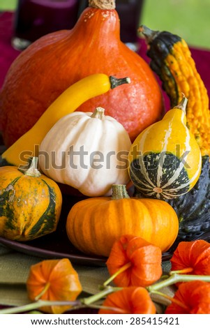 Colorful autumn or Thanksgiving background with a display of mixed orange, white and ornamental variegated gourds, pumpkin and squash with a spray of Chinese lantern flower fruits in the foreground - stock photo